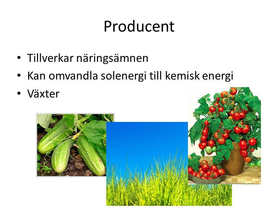 Producent Tillverkar näringsämnen