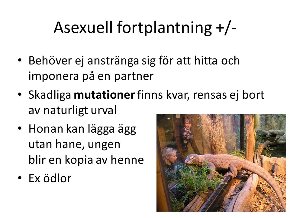 Asexuell fortplantning +/-