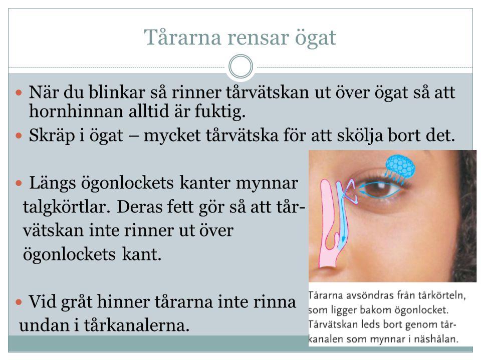Tårarna rensar ögat När du blinkar så rinner tårvätskan ut över ögat så att hornhinnan alltid är fuktig.