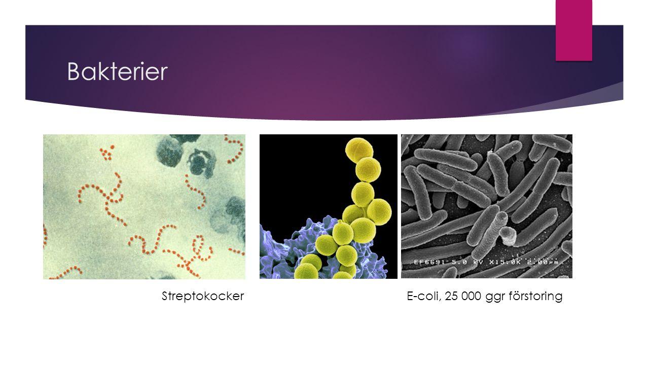 Bakterier Streptokocker E-coli, 25 000 ggr förstoring