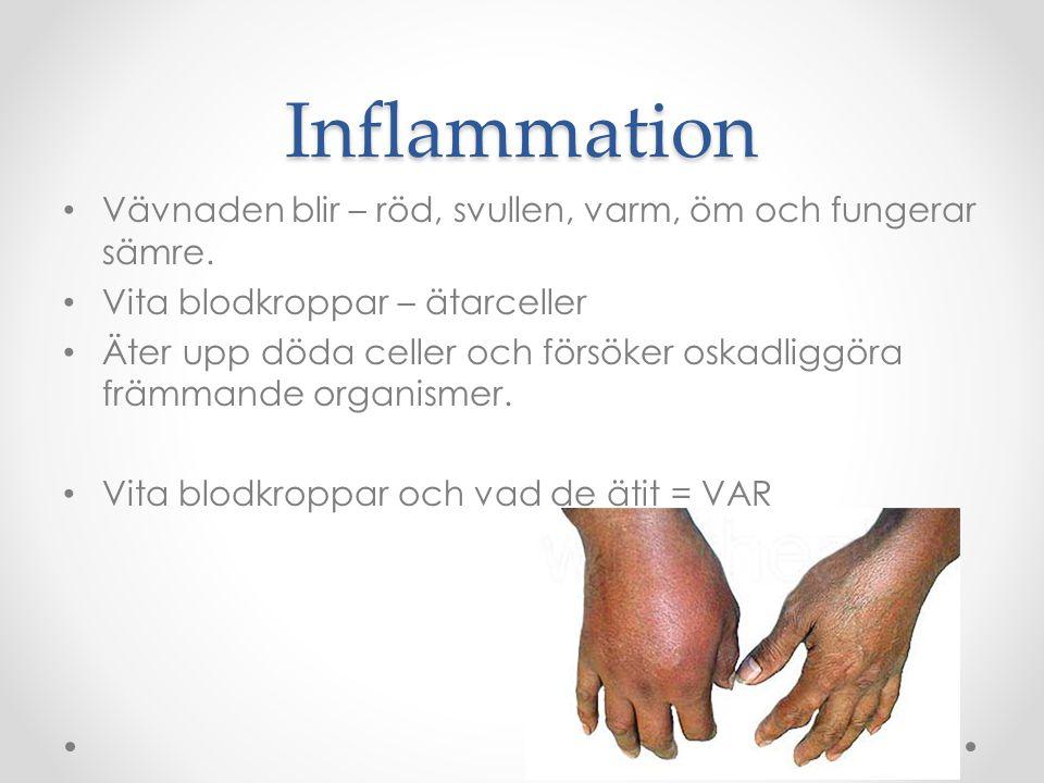 Inflammation Vävnaden blir – röd, svullen, varm, öm och fungerar sämre. Vita blodkroppar – ätarceller.