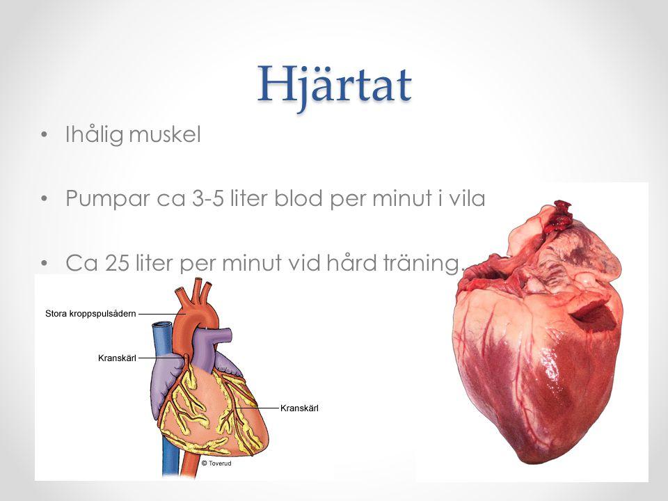 Hjärtat Ihålig muskel Pumpar ca 3-5 liter blod per minut i vila
