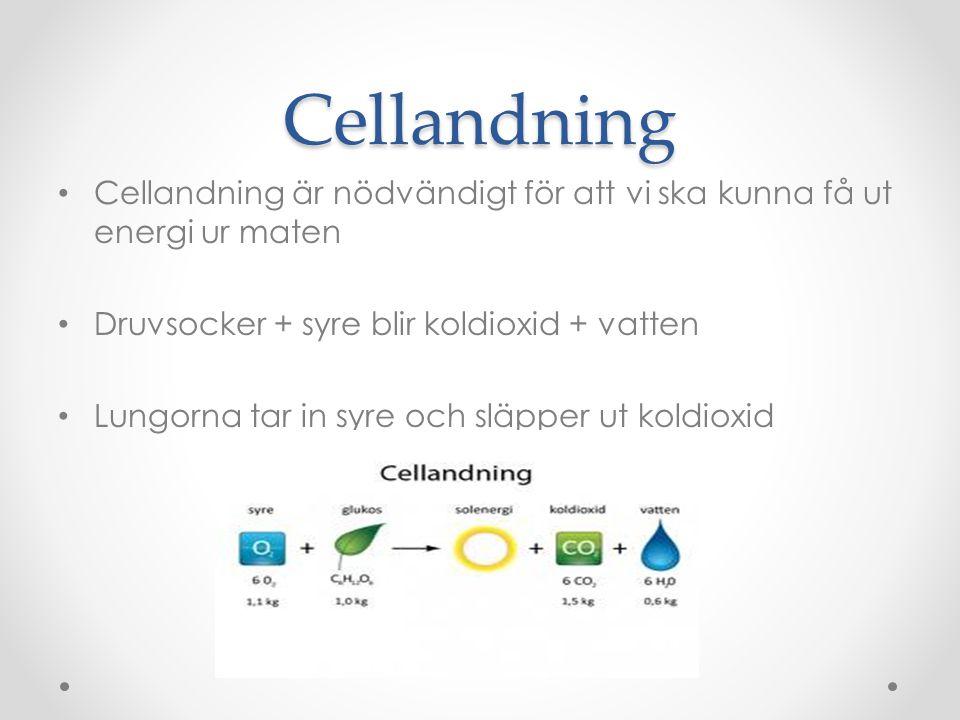 Cellandning Cellandning är nödvändigt för att vi ska kunna få ut energi ur maten. Druvsocker + syre blir koldioxid + vatten.