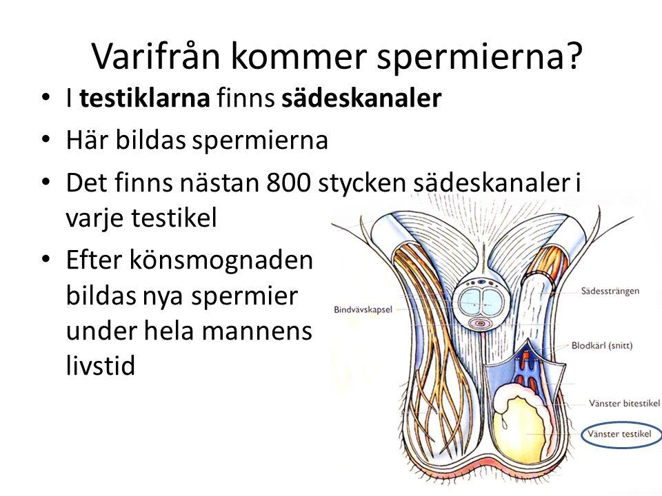 Varifrån kommer spermierna