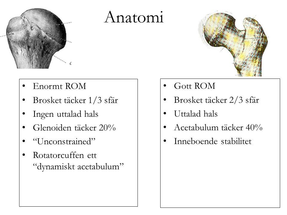 Anatomi Enormt ROM Gott ROM Brosket täcker 1/3 sfär