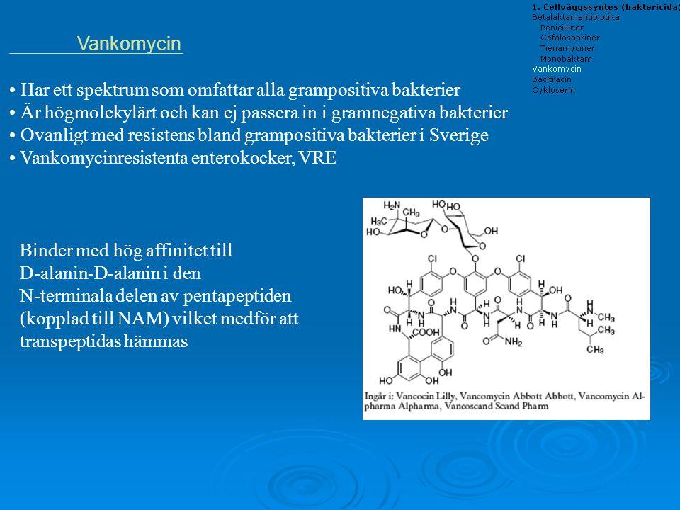 Vankomycin Har ett spektrum som omfattar alla grampositiva bakterier. Är högmolekylärt och kan ej passera in i gramnegativa bakterier.