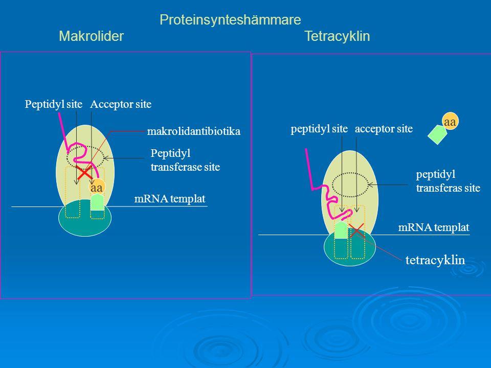 Proteinsynteshämmare Makrolider Tetracyklin