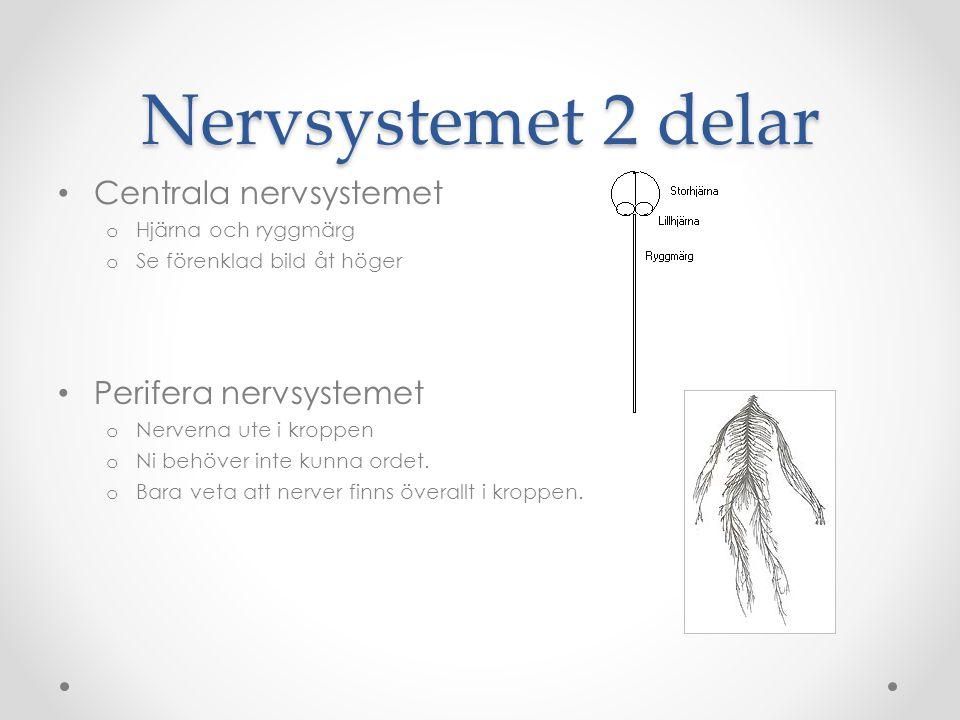 Nervsystemet 2 delar Centrala nervsystemet Perifera nervsystemet