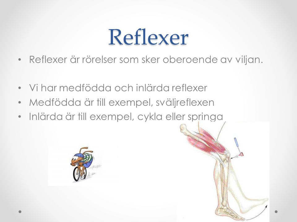 Reflexer Reflexer är rörelser som sker oberoende av viljan.