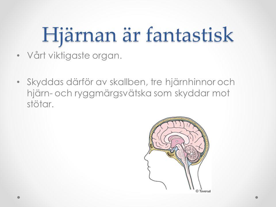 Hjärnan är fantastisk Vårt viktigaste organ.
