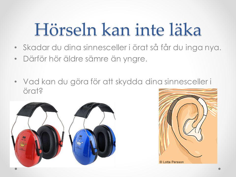 Hörseln kan inte läka Skadar du dina sinnesceller i örat så får du inga nya. Därför hör äldre sämre än yngre.