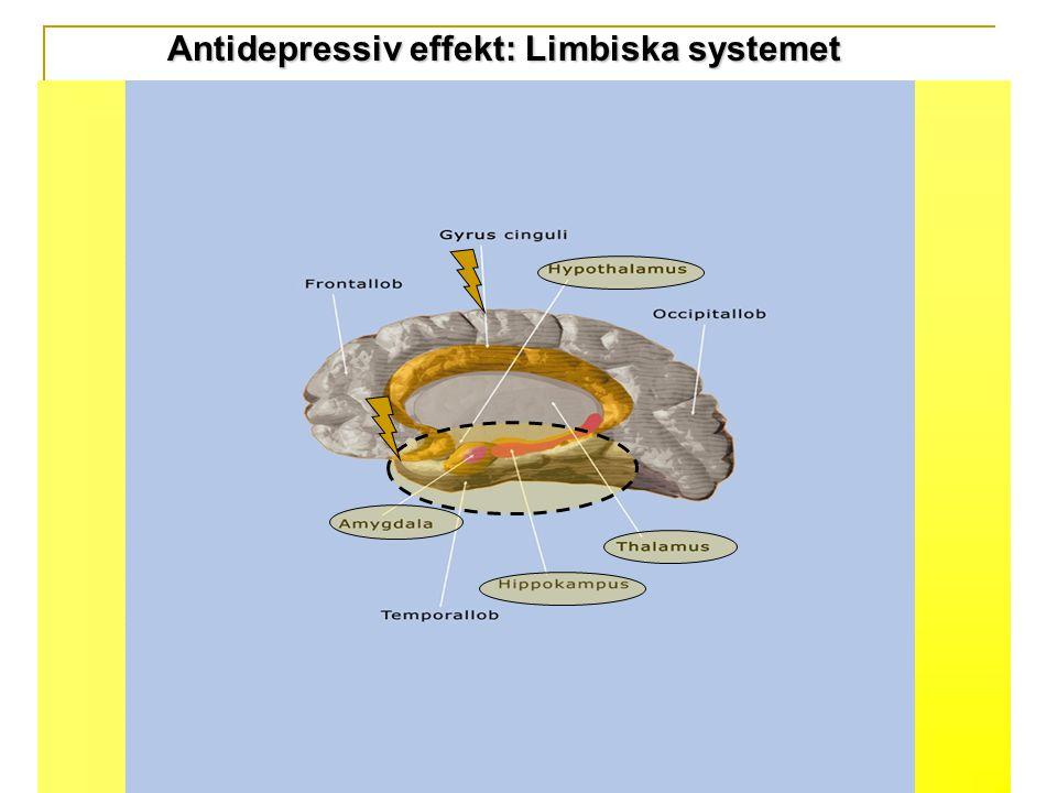 Antidepressiv effekt: Limbiska systemet