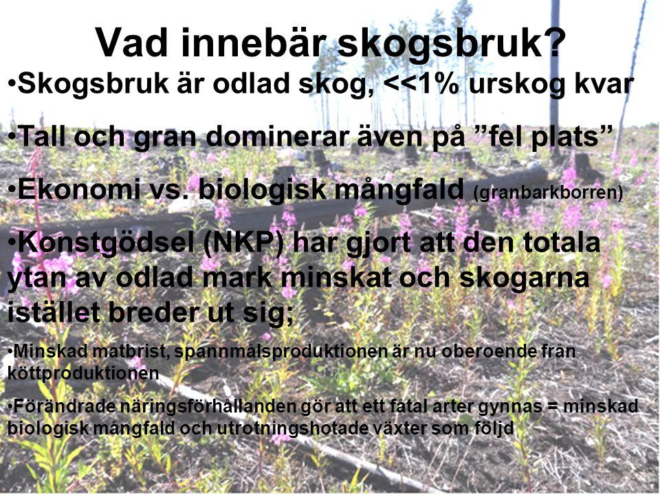 Vad innebär skogsbruk Skogsbruk är odlad skog, <<1% urskog kvar
