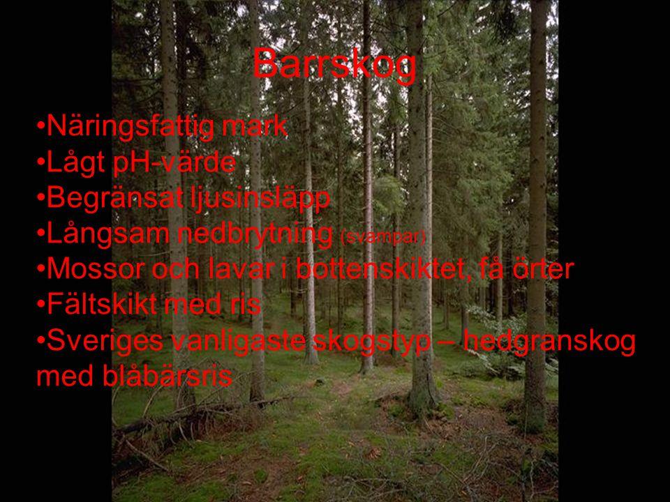 Barrskog Näringsfattig mark Lågt pH-värde Begränsat ljusinsläpp