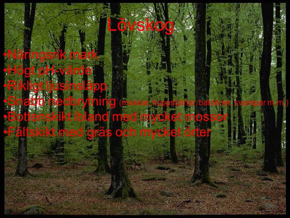 Lövskog Näringsrik mark Högt pH-värde Rikligt ljusinsläpp