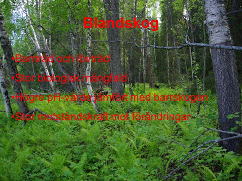Blandskog Barrträd och lövträd Stor biologisk mångfald