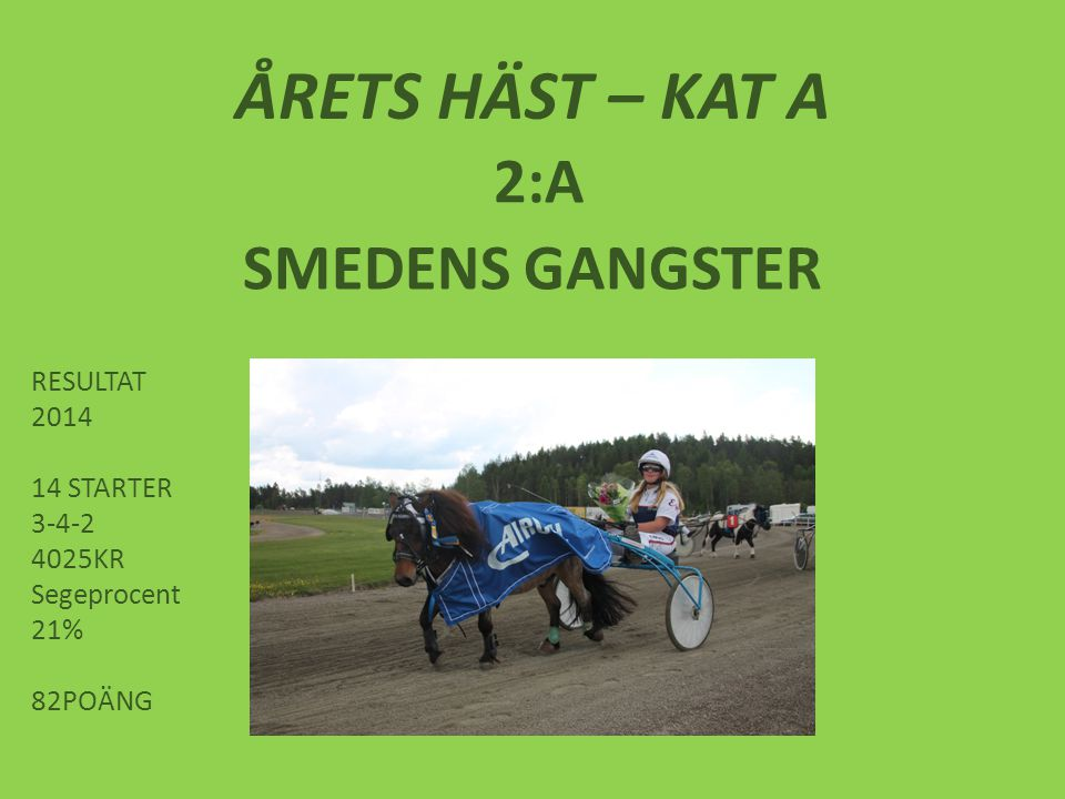 ÅRETS HÄST – KAT A 2:A SMEDENS GANGSTER RESULTAT 2014 14 STARTER 3-4-2