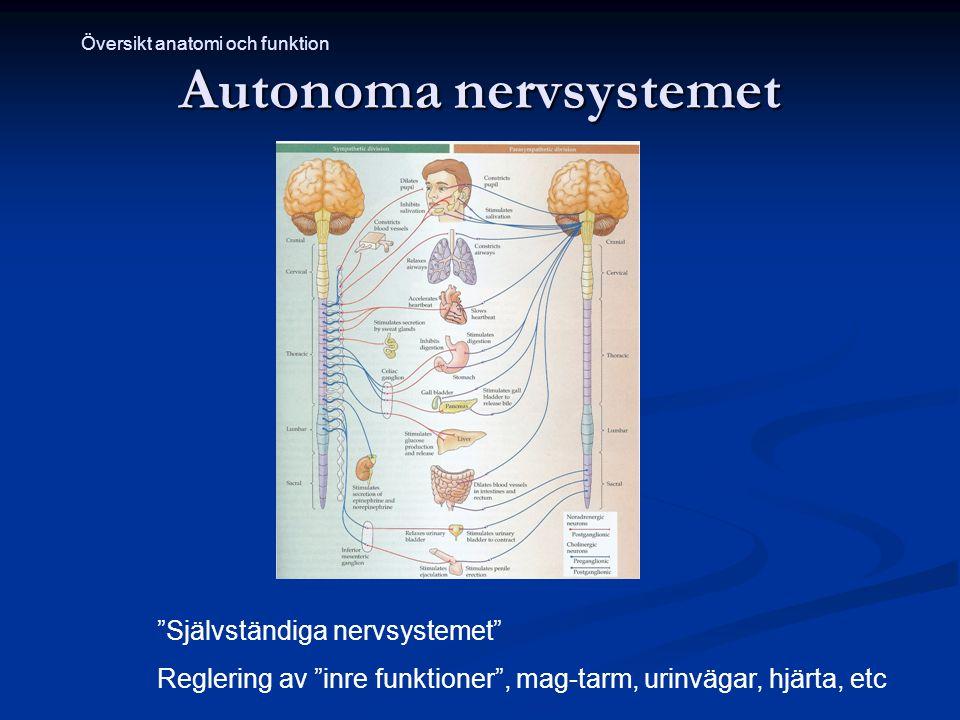 Autonoma nervsystemet