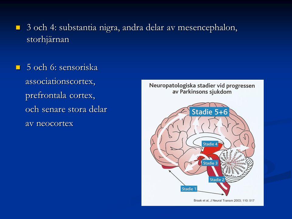 3 och 4: substantia nigra, andra delar av mesencephalon, storhjärnan