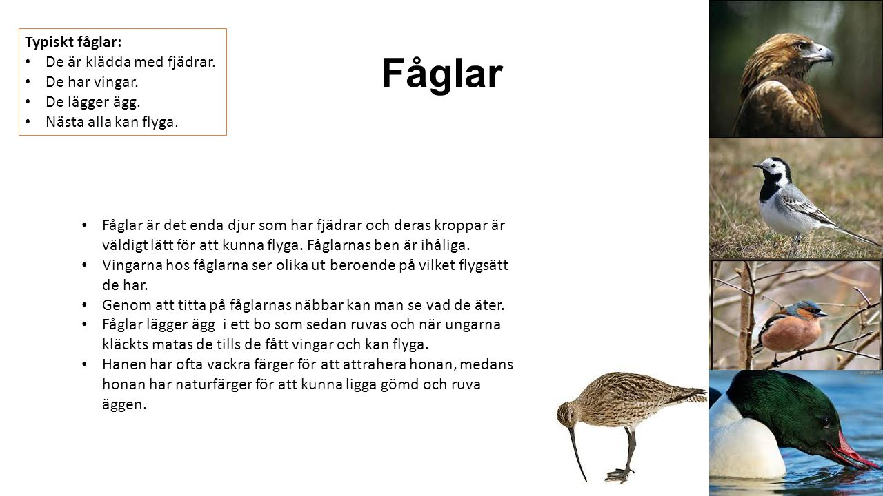 Fåglar Typiskt fåglar: De är klädda med fjädrar. De har vingar.
