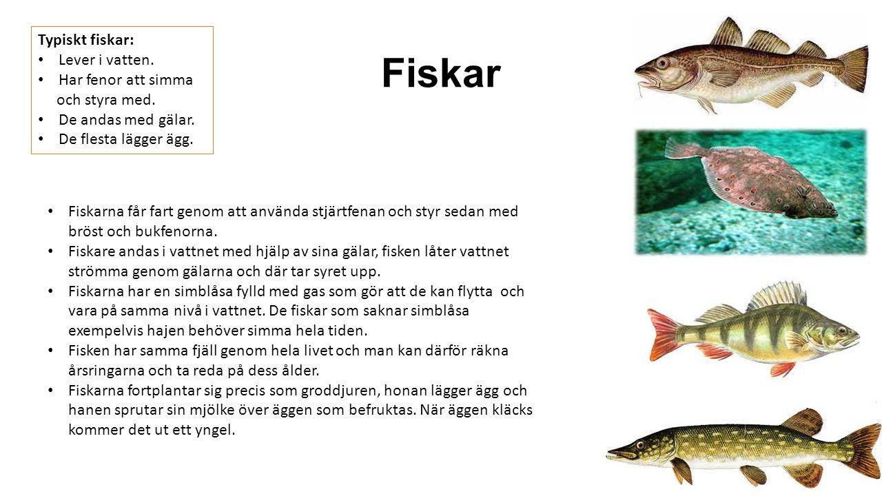 Fiskar Typiskt fiskar: Lever i vatten. Har fenor att simma