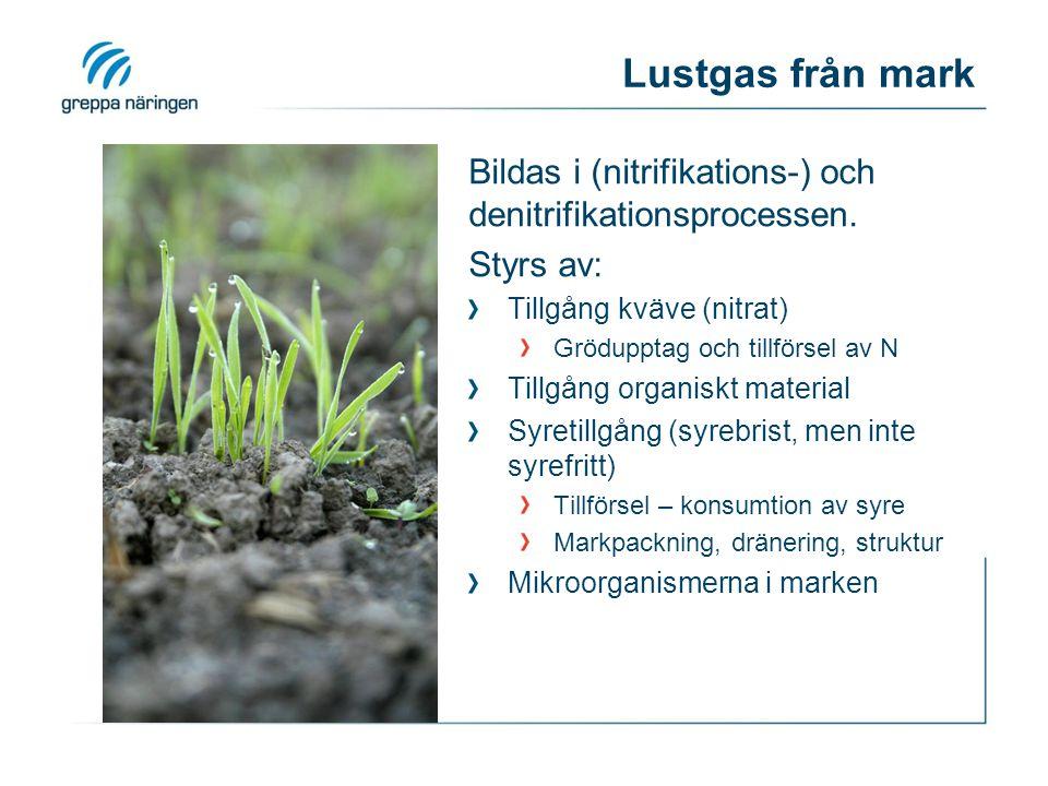 Lustgas från mark Bildas i (nitrifikations-) och denitrifikationsprocessen. Styrs av: Tillgång kväve (nitrat)