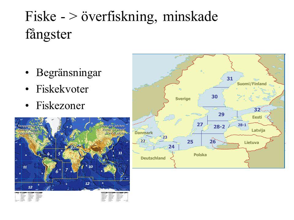 Fiske - > överfiskning, minskade fångster