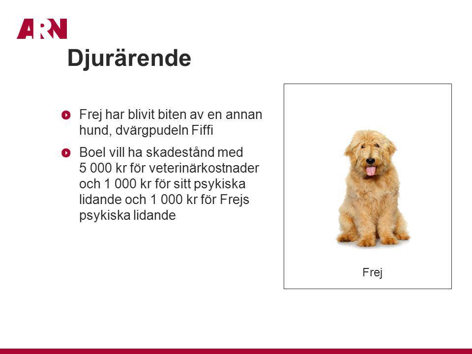 Djurärende Frej har blivit biten av en annan hund, dvärgpudeln Fiffi