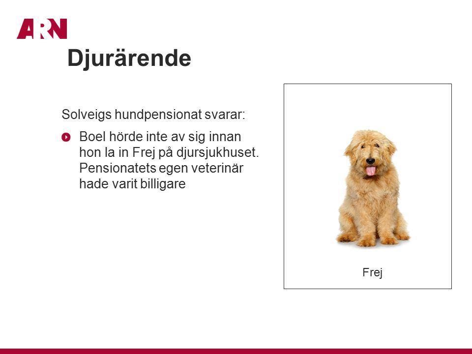 Djurärende Solveigs hundpensionat svarar: