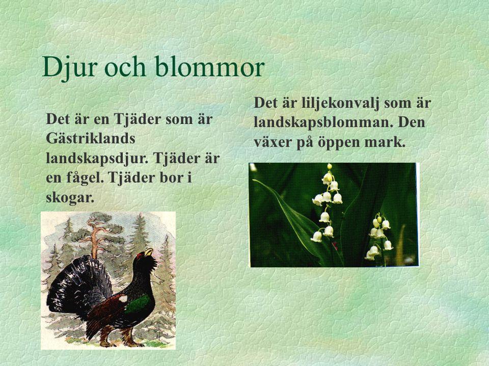 Djur och blommor Det är liljekonvalj som är landskapsblomman. Den växer på öppen mark.