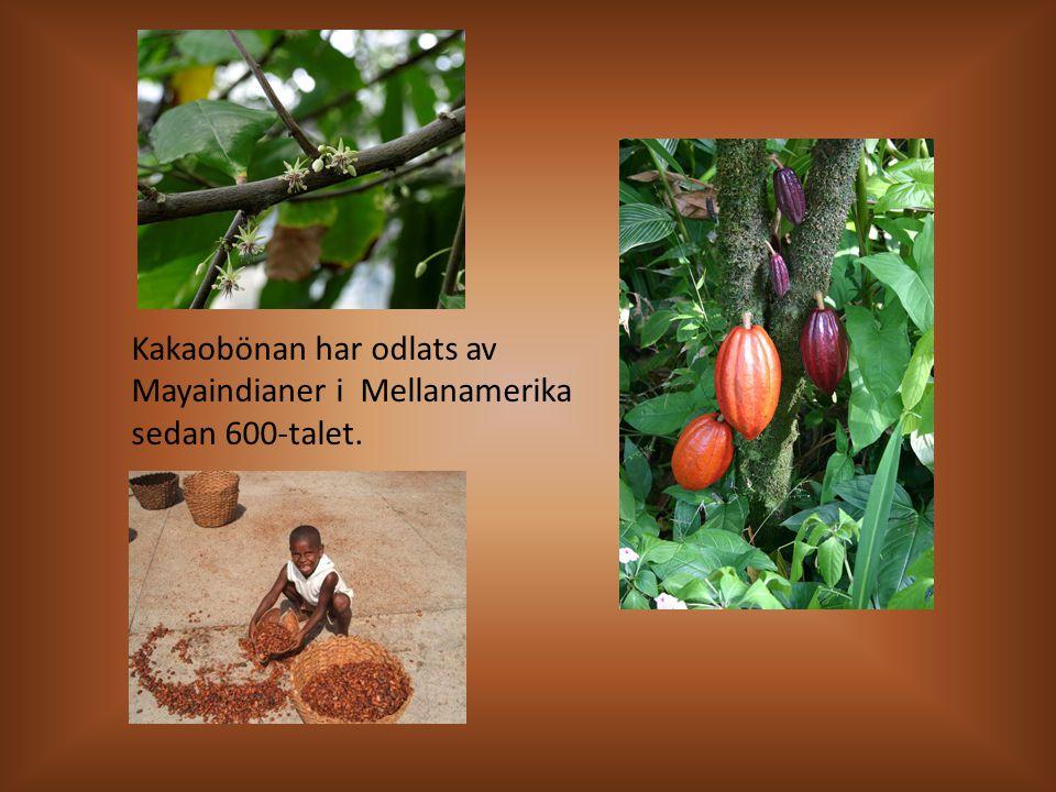 Kakaobönan har odlats av Mayaindianer i Mellanamerika sedan 600-talet.
