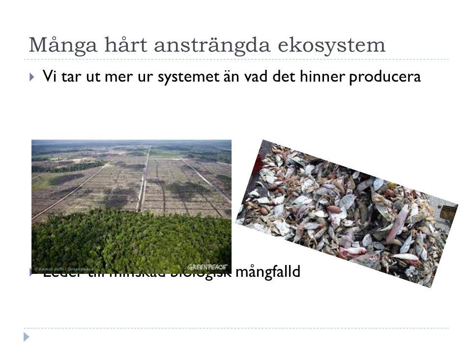 Många hårt ansträngda ekosystem