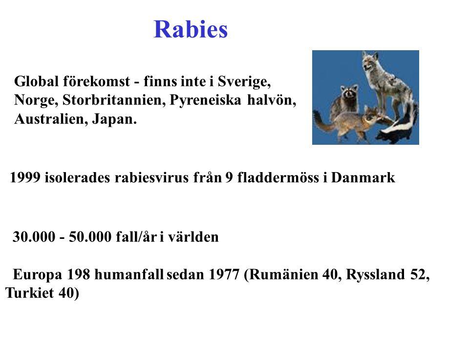 Rabies Global förekomst - finns inte i Sverige, Norge, Storbritannien, Pyreneiska halvön, Australien, Japan.