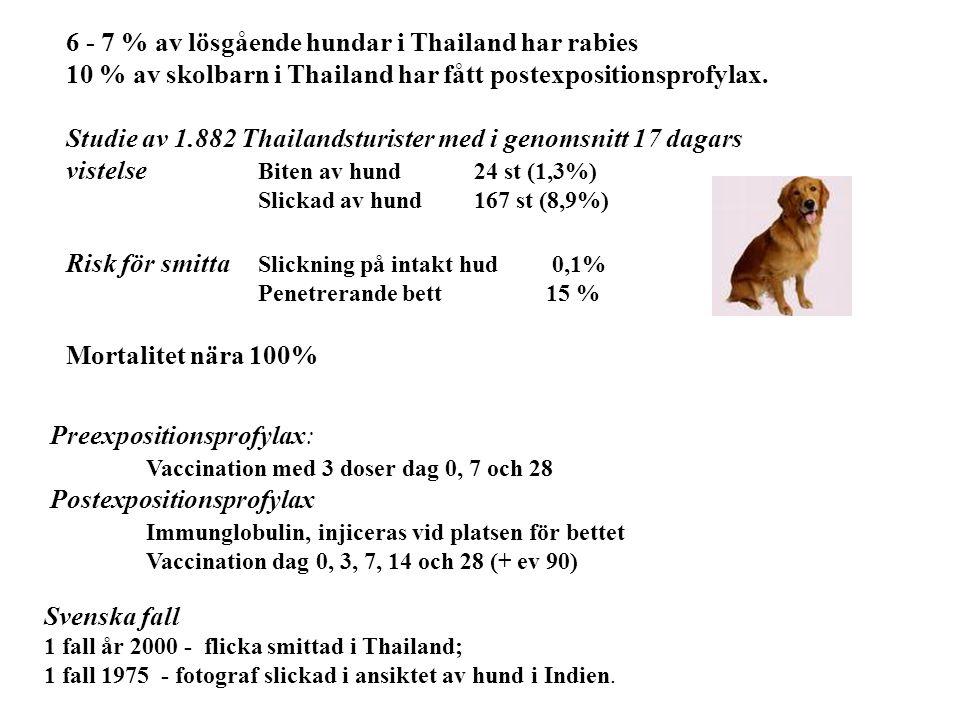6 - 7 % av lösgående hundar i Thailand har rabies