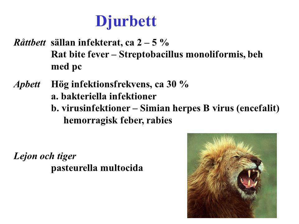 Djurbett Råttbett sällan infekterat, ca 2 – 5 % Rat bite fever – Streptobacillus monoliformis, beh med pc.
