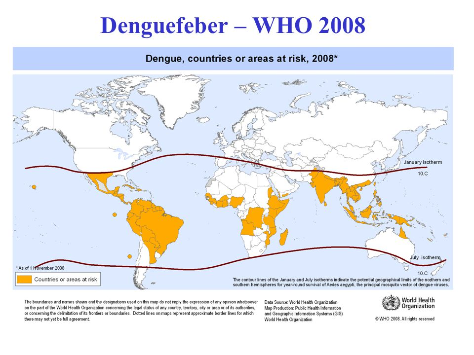 Denguefeber – WHO 2008