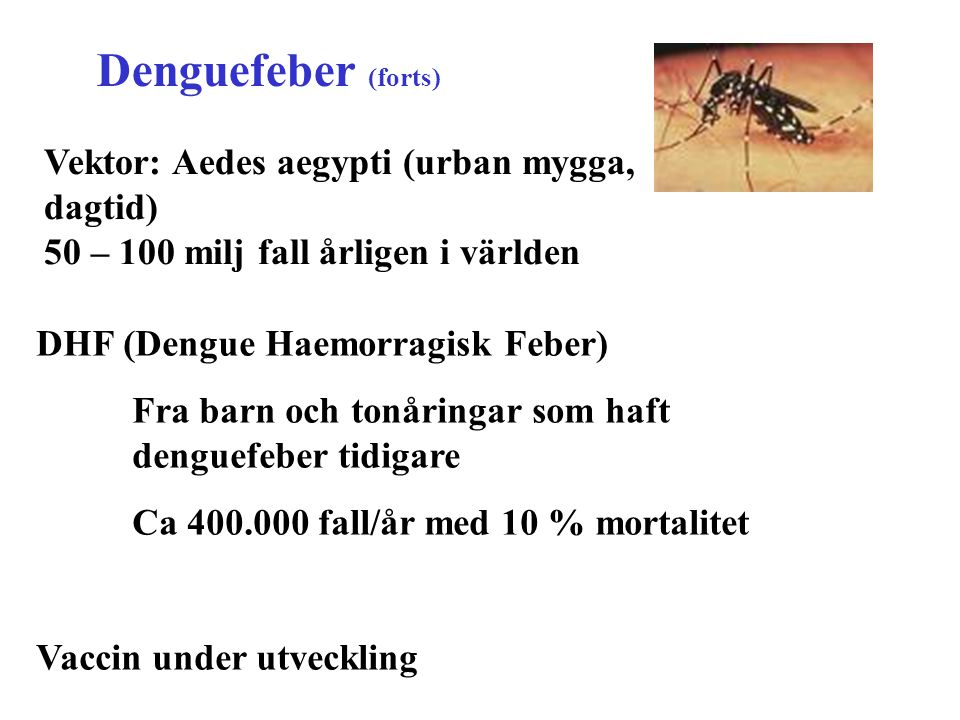 Denguefeber (forts) Vektor: Aedes aegypti (urban mygga, dagtid)