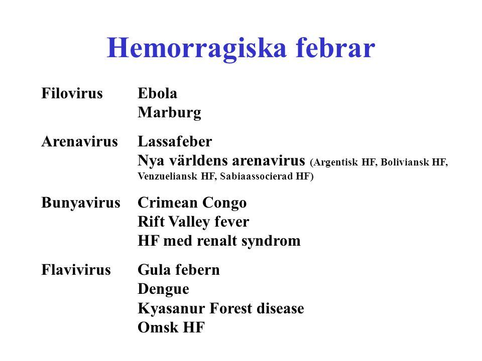 Hemorragiska febrar Filovirus Ebola Marburg