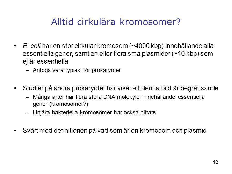 Alltid cirkulära kromosomer