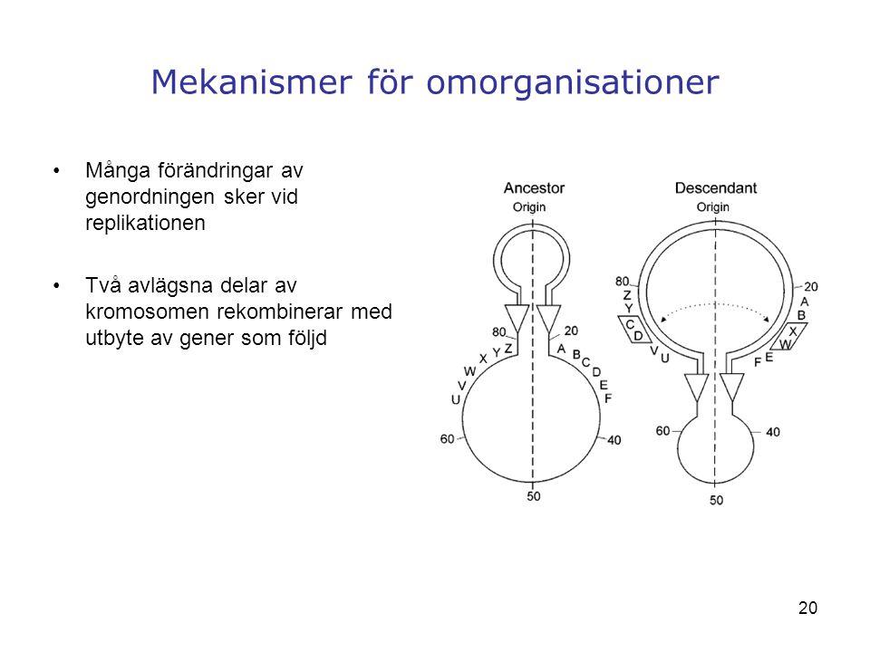 Mekanismer för omorganisationer