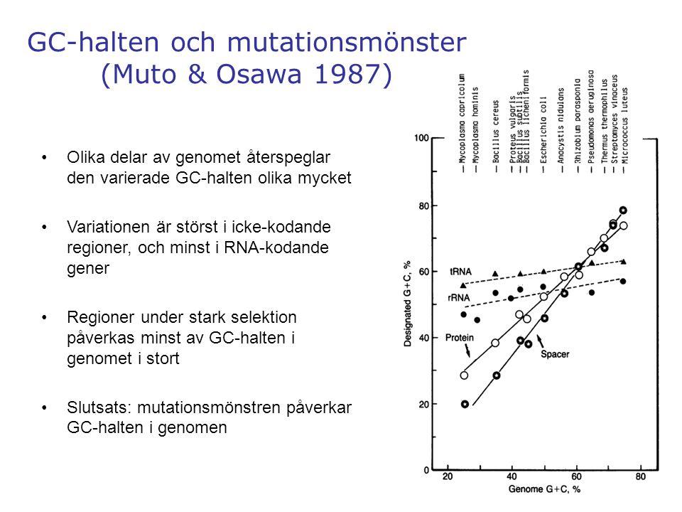GC-halten och mutationsmönster (Muto & Osawa 1987)