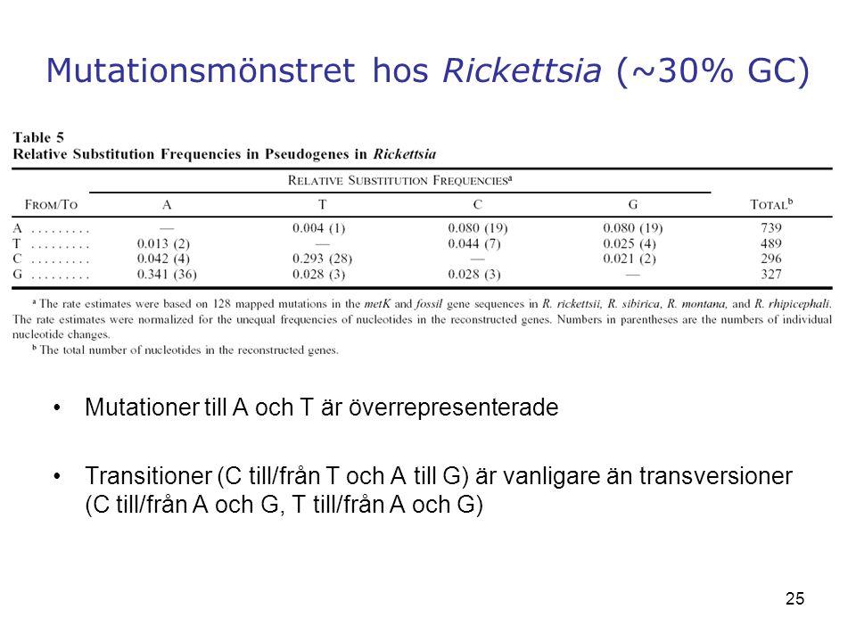 Mutationsmönstret hos Rickettsia (~30% GC)