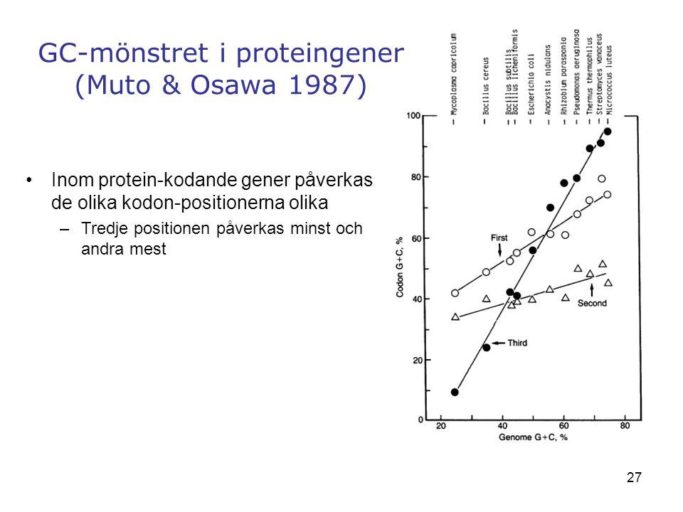 GC-mönstret i proteingener (Muto & Osawa 1987)