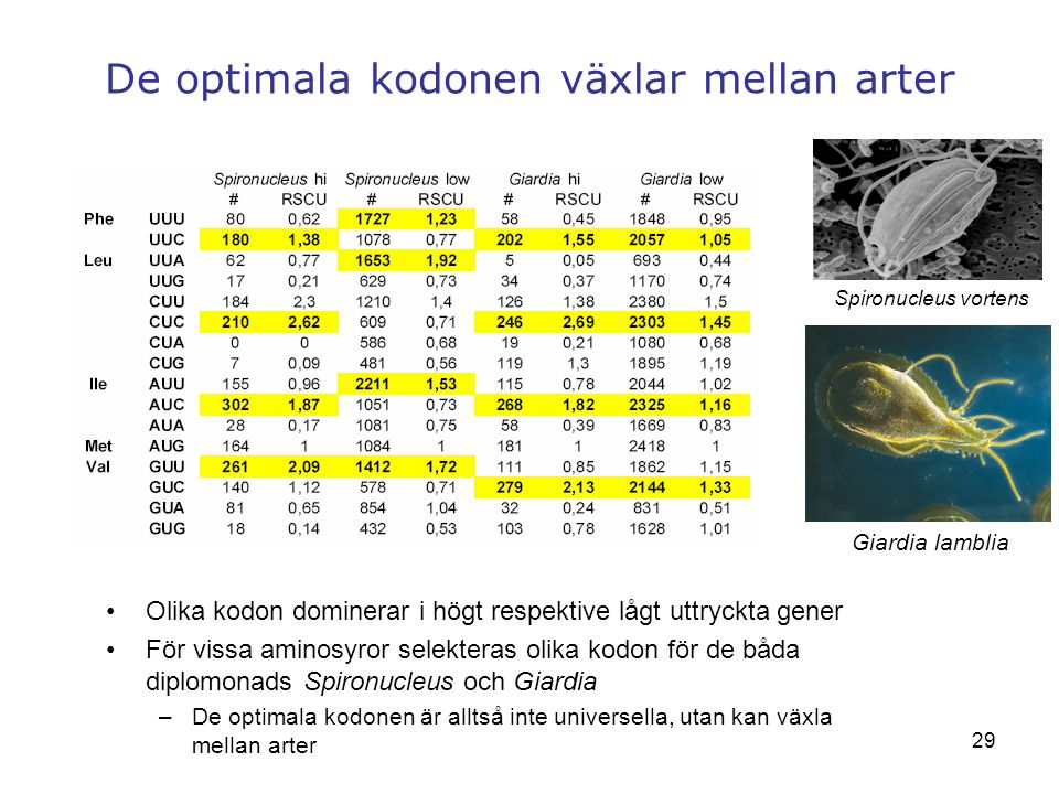 De optimala kodonen växlar mellan arter