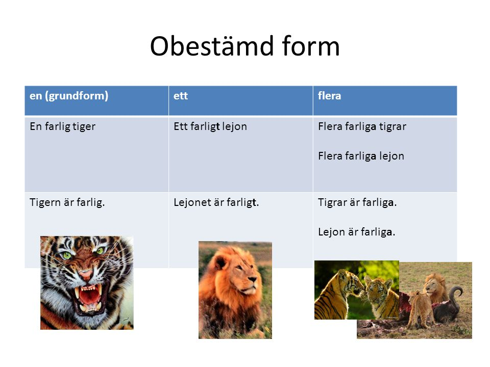 Obestämd form en (grundform) ett flera En farlig tiger