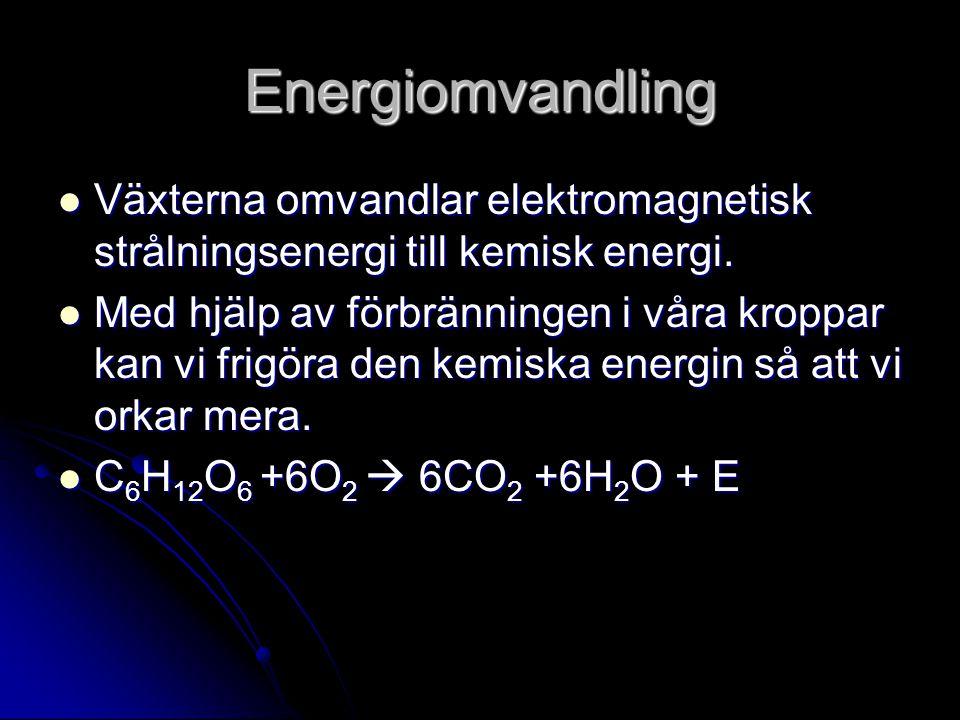 Energiomvandling Växterna omvandlar elektromagnetisk strålningsenergi till kemisk energi.