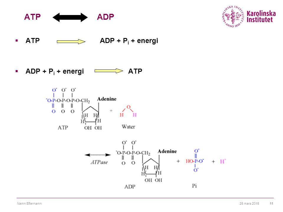 ATP ADP ATP ADP + Pi + energi ADP + Pi + energi ATP