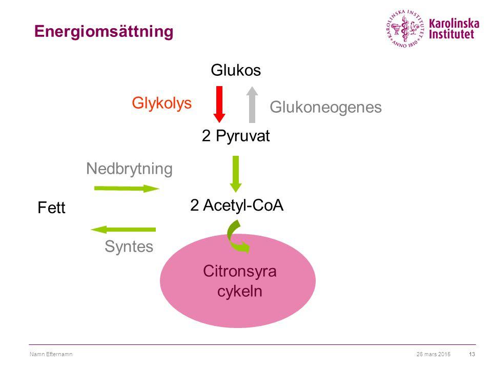 Energiomsättning Glukos Glykolys Glukoneogenes 2 Pyruvat Nedbrytning