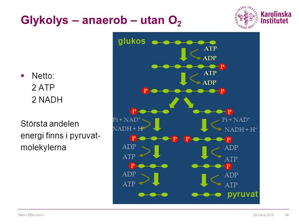 Glykolys – anaerob – utan O2