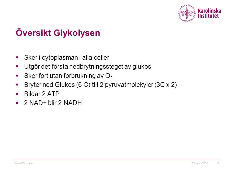 Översikt Glykolysen Sker i cytoplasman i alla celler
